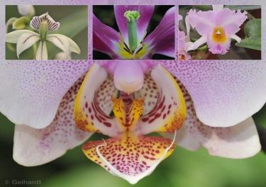 orchid-flowers-macro