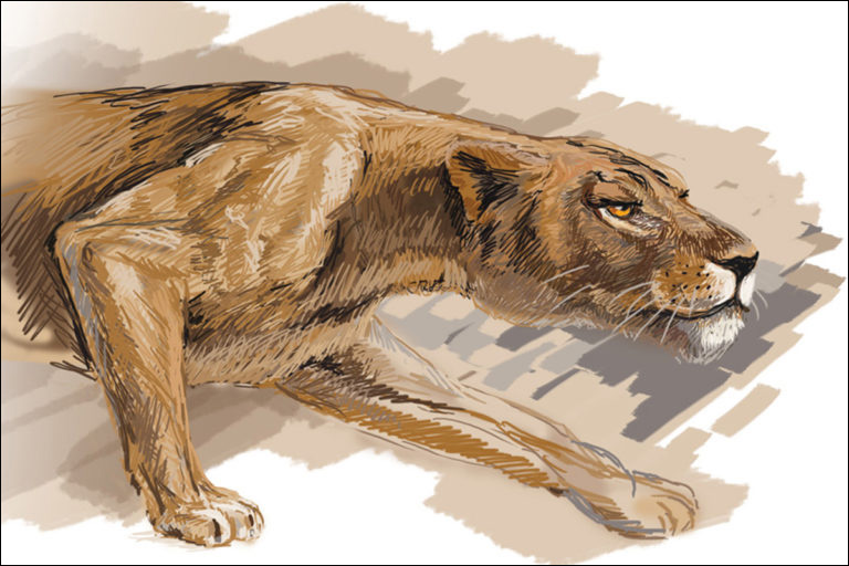 Lion Illustration – Digital Wacom Tablet